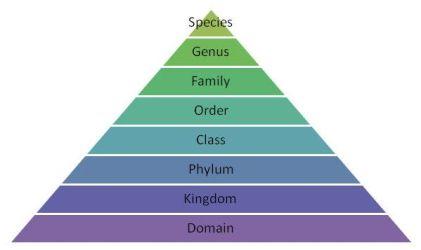 TaxonomicCategories