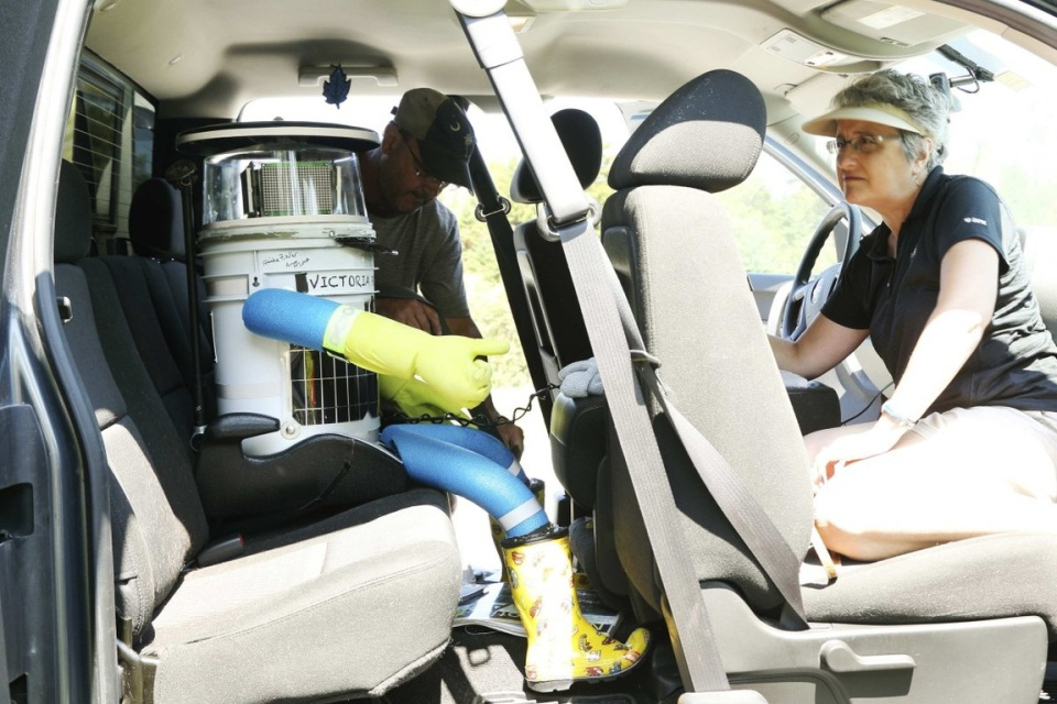 Anne Saulnier watches as her husband Brian buckles up the anthropomorphic robot named hitchBOT near Halifax