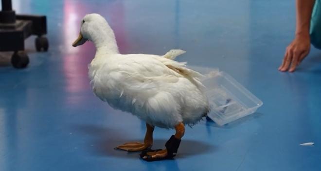 quack-quack-3d-print