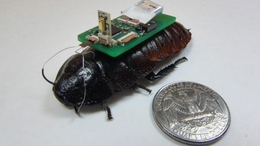Bozkurt-Roach-HEADER-848x477