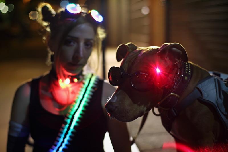 trinket_olive-becky-stern-laser-dog-goggles
